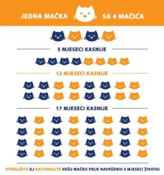 Posljedice nesterilizacije mačaka