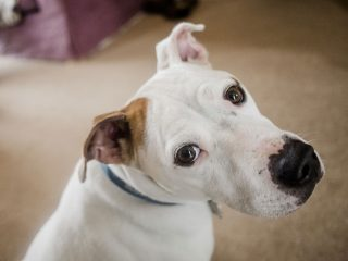 Slučaj očnog crva kod pasa